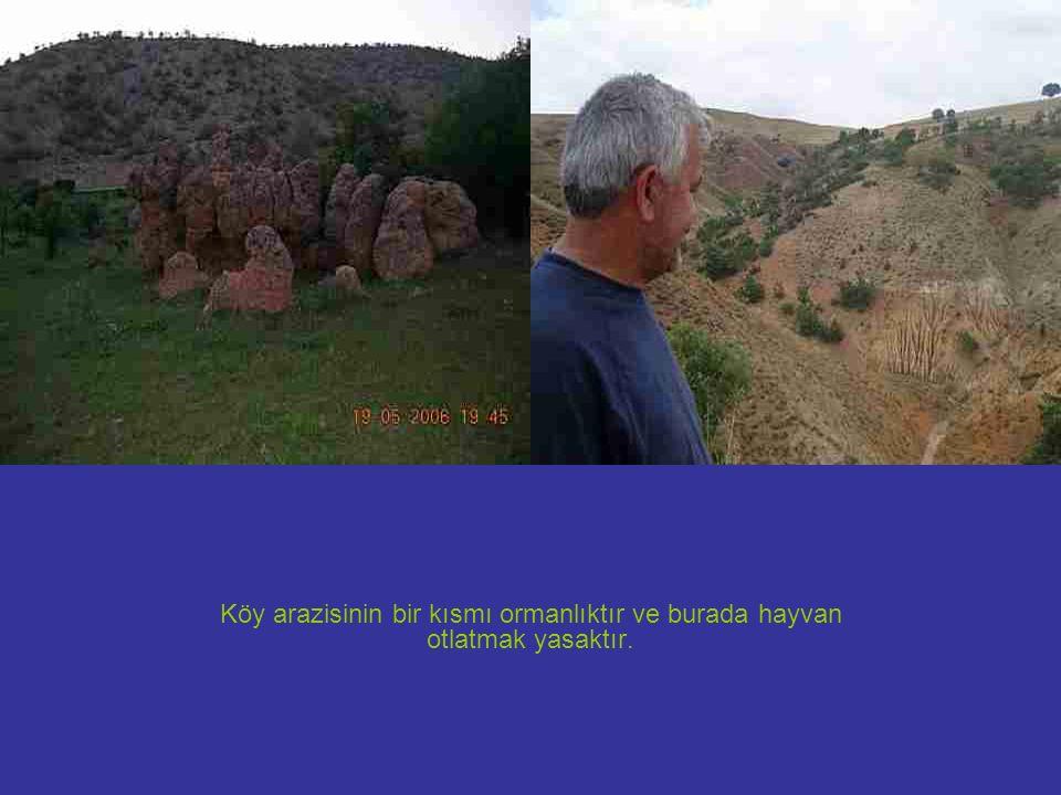 Köy arazisinin bir kısmı ormanlıktır ve burada hayvan otlatmak yasaktır.