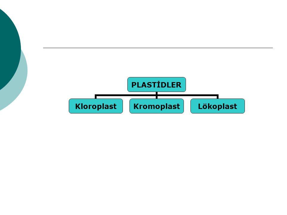 PLASTİDLER KloroplastKromoplastLökoplast