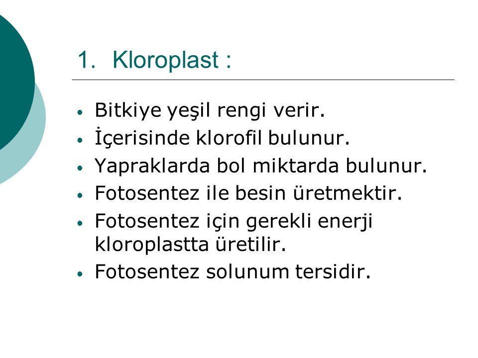 1.Kloroplast : Bitkiye yeşil rengi verir. İçerisinde klorofil bulunur. Yapraklarda bol miktarda bulunur. Fotosentez ile besin üretmektir. Fotosentez i