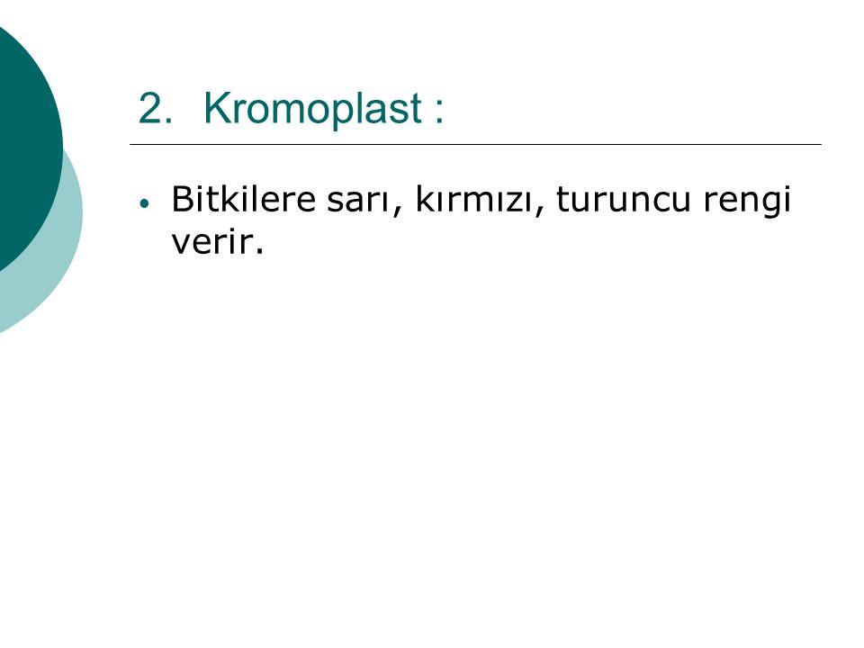 2.Kromoplast : Bitkilere sarı, kırmızı, turuncu rengi verir.