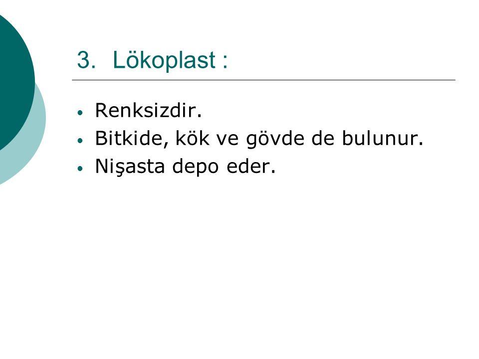 3.Lökoplast : Renksizdir. Bitkide, kök ve gövde de bulunur. Nişasta depo eder.