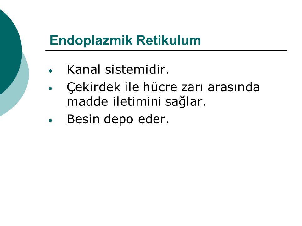 Endoplazmik Retikulum Kanal sistemidir. Çekirdek ile hücre zarı arasında madde iletimini sağlar. Besin depo eder.