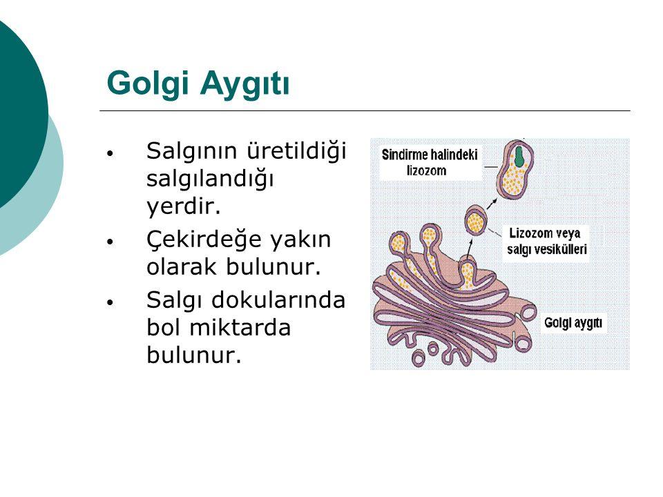 Golgi Aygıtı Salgının üretildiği salgılandığı yerdir. Çekirdeğe yakın olarak bulunur. Salgı dokularında bol miktarda bulunur.