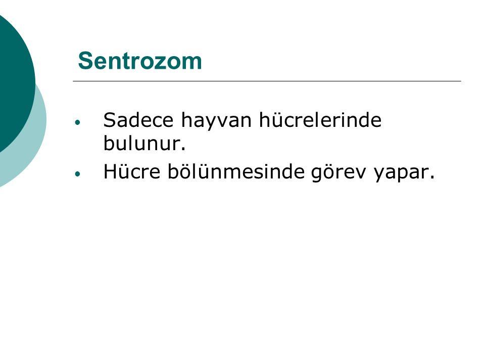 Sentrozom Sadece hayvan hücrelerinde bulunur. Hücre bölünmesinde görev yapar.