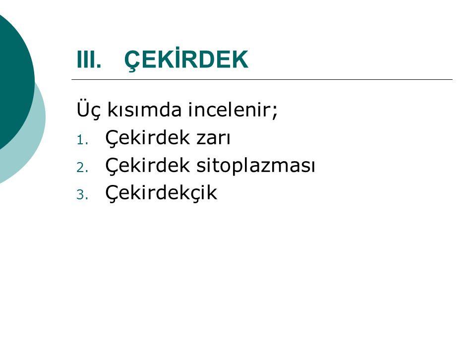 III.ÇEKİRDEK Üç kısımda incelenir; 1. Çekirdek zarı 2. Çekirdek sitoplazması 3. Çekirdekçik