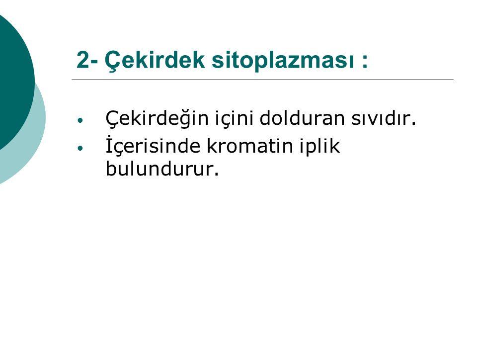 2- Çekirdek sitoplazması : Çekirdeğin içini dolduran sıvıdır. İçerisinde kromatin iplik bulundurur.