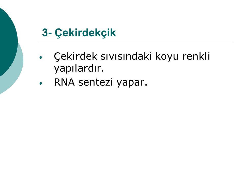3- Çekirdekçik Çekirdek sıvısındaki koyu renkli yapılardır. RNA sentezi yapar.