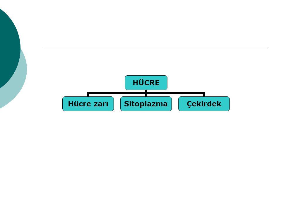HÜCRE Hücre zarıSitoplazmaÇekirdek