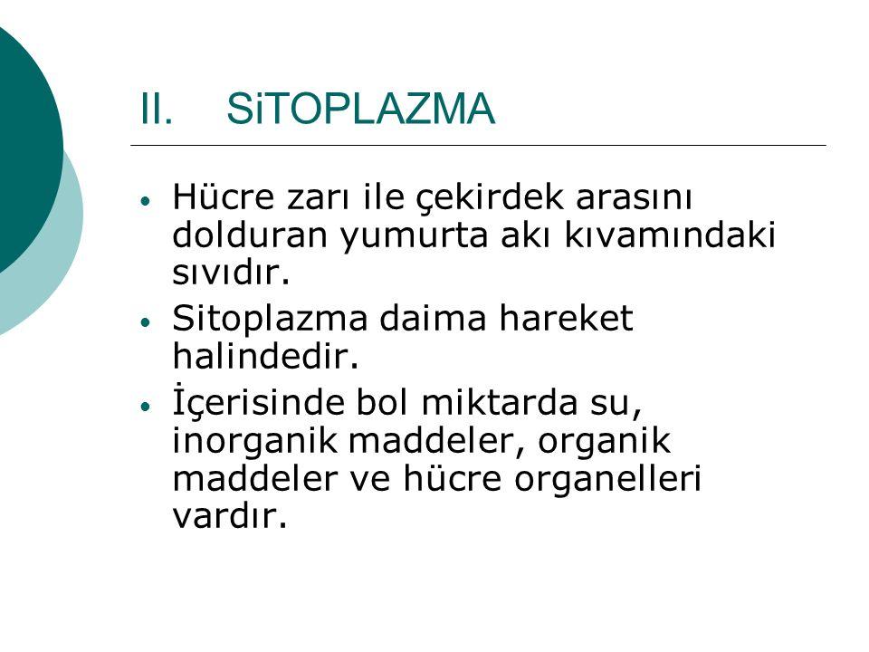 II.SiTOPLAZMA Hücre zarı ile çekirdek arasını dolduran yumurta akı kıvamındaki sıvıdır.