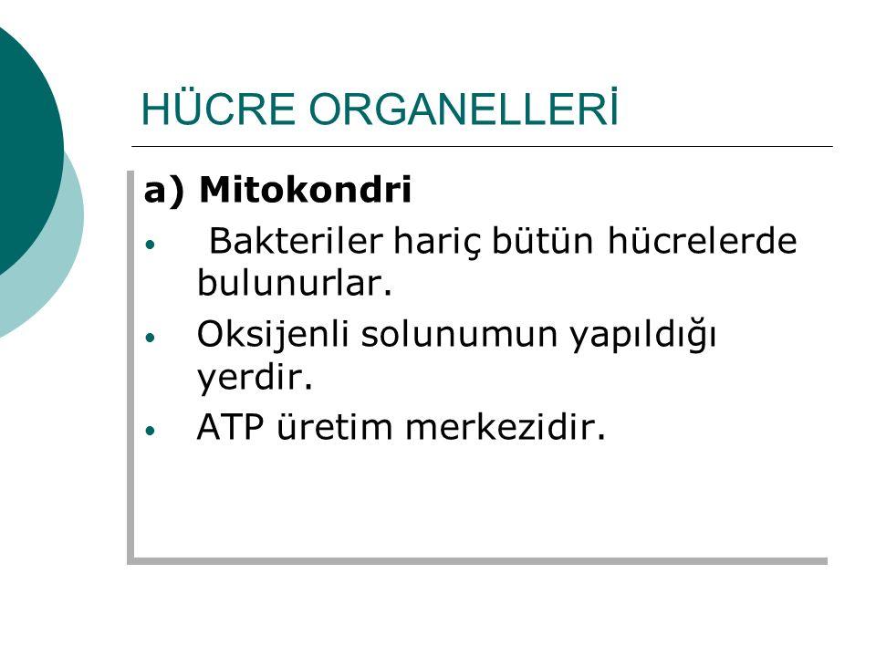 HÜCRE ORGANELLERİ a) Mitokondri Bakteriler hariç bütün hücrelerde bulunurlar. Oksijenli solunumun yapıldığı yerdir. ATP üretim merkezidir. a) Mitokond