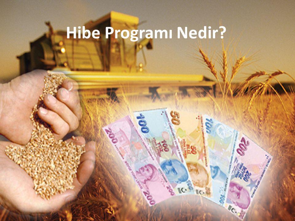 Hibe Programı Nedir?