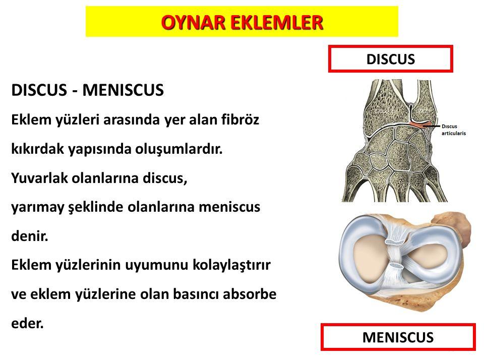 10 DISCUS - MENISCUS Eklem yüzleri arasında yer alan fibröz kıkırdak yapısında oluşumlardır. Yuvarlak olanlarına discus, yarımay şeklinde olanlarına m