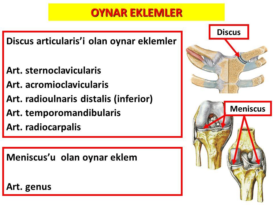 11 Discus articularis'i olan oynar eklemler Art. sternoclavicularis Art. acromioclavicularis Art. radioulnaris distalis (inferior) Art. temporomandibu