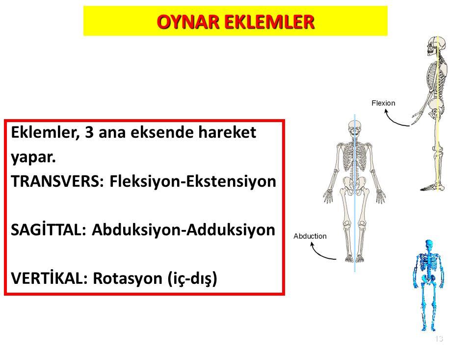 13 OYNAR EKLEMLER Eklemler, 3 ana eksende hareket yapar. TRANSVERS: Fleksiyon-Ekstensiyon SAGİTTAL: Abduksiyon-Adduksiyon VERTİKAL: Rotasyon (iç-dış)
