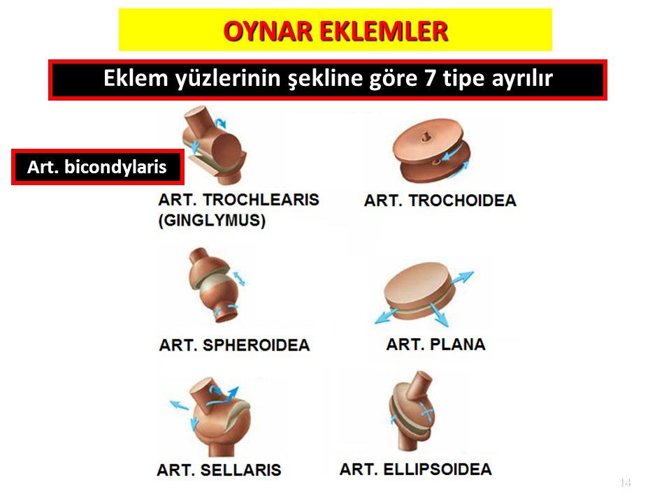 14 OYNAR EKLEMLER Art. bicondylaris Eklem yüzlerinin şekline göre 7 tipe ayrılır