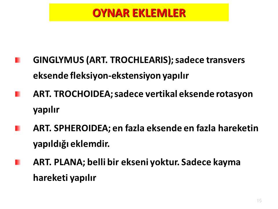 15 OYNAR EKLEMLER GINGLYMUS (ART. TROCHLEARIS); sadece transvers eksende fleksiyon-ekstensiyon yapılır ART. TROCHOIDEA; sadece vertikal eksende rotasy