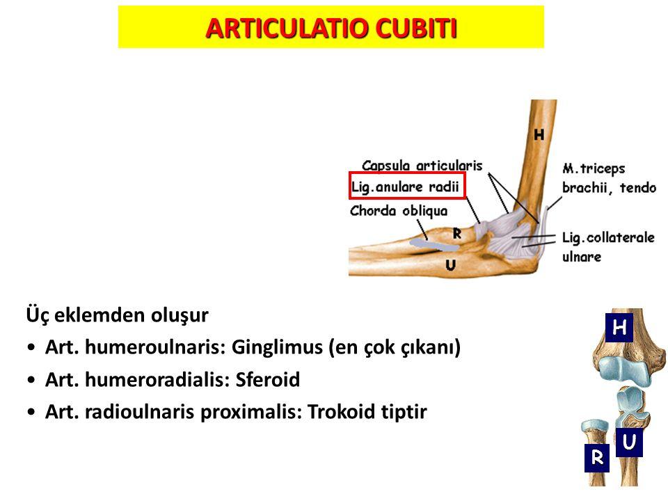 28 ARTICULATIO CUBITI Üç eklemden oluşur Art. humeroulnaris: Ginglimus (en çok çıkanı) Art. humeroradialis: Sferoid Art. radioulnaris proximalis: Trok