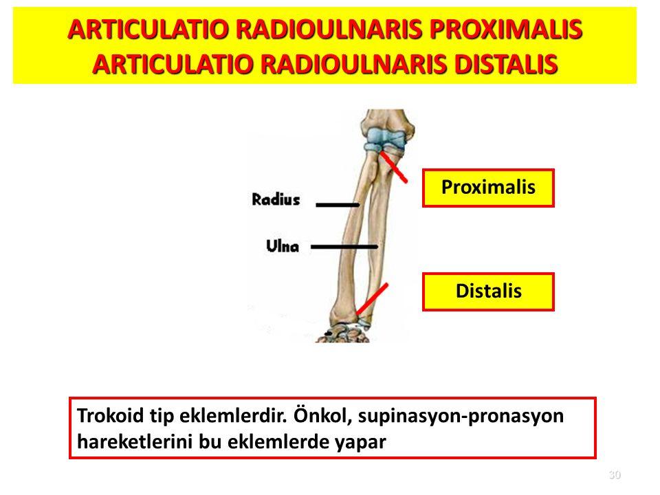 30 ARTICULATIO RADIOULNARIS PROXIMALIS ARTICULATIO RADIOULNARIS DISTALIS Distalis Proximalis Trokoid tip eklemlerdir. Önkol, supinasyon-pronasyon hare
