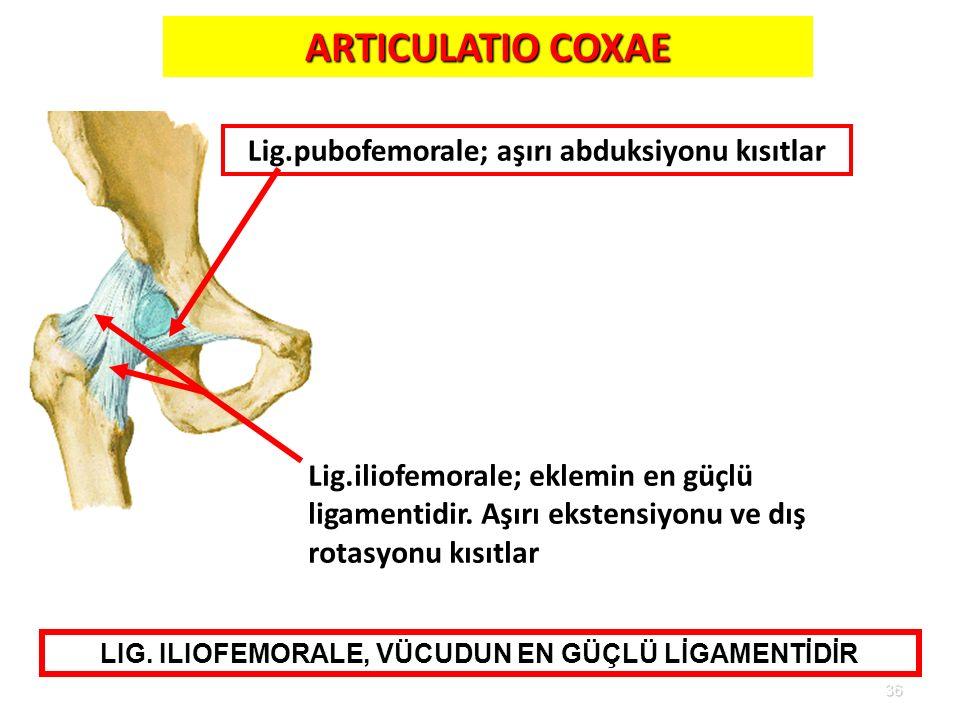 36 ARTICULATIO COXAE Lig.iliofemorale; eklemin en güçlü ligamentidir. Aşırı ekstensiyonu ve dış rotasyonu kısıtlar Lig.pubofemorale; aşırı abduksiyonu