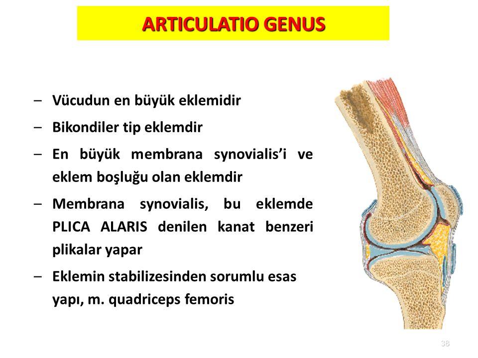 38 ARTICULATIO GENUS –Vücudun en büyük eklemidir –Bikondiler tip eklemdir –En büyük membrana synovialis'i ve eklem boşluğu olan eklemdir –Membrana syn
