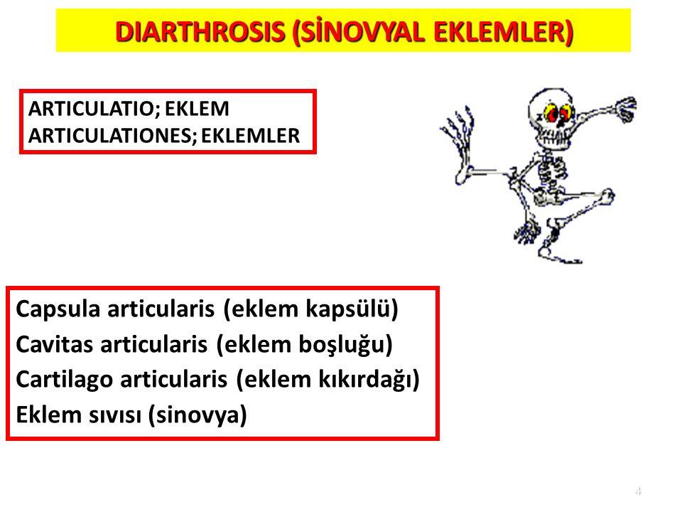 4 DIARTHROSIS (SİNOVYAL EKLEMLER) Capsula articularis (eklem kapsülü) Cavitas articularis (eklem boşluğu) Cartilago articularis (eklem kıkırdağı) Ekle