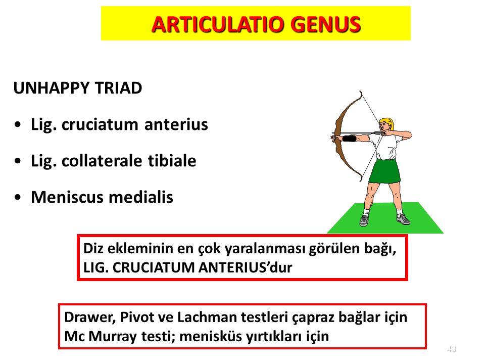 43 ARTICULATIO GENUS UNHAPPY TRIAD Lig. cruciatum anterius Lig. collaterale tibiale Meniscus medialis Diz ekleminin en çok yaralanması görülen bağı, L
