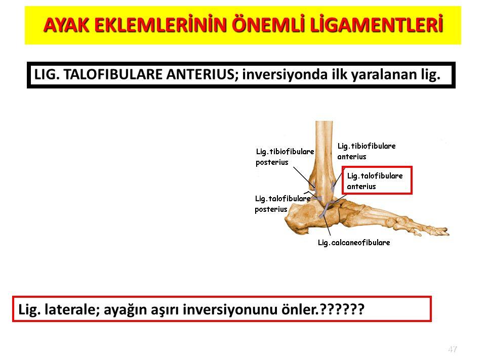 47 AYAK EKLEMLERİNİN ÖNEMLİ LİGAMENTLERİ LIG. TALOFIBULARE ANTERIUS; inversiyonda ilk yaralanan lig. Lig. laterale; ayağın aşırı inversiyonunu önler.?