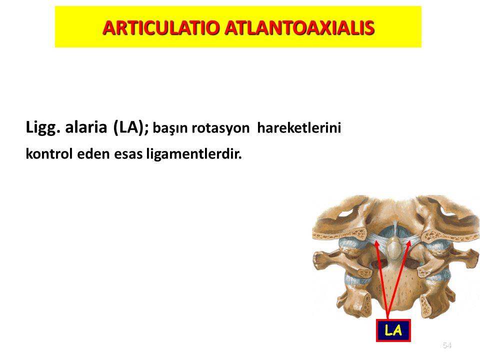 54 ARTICULATIO ATLANTOAXIALIS LA Ligg. alaria (LA); başın rotasyon hareketlerini kontrol eden esas ligamentlerdir.