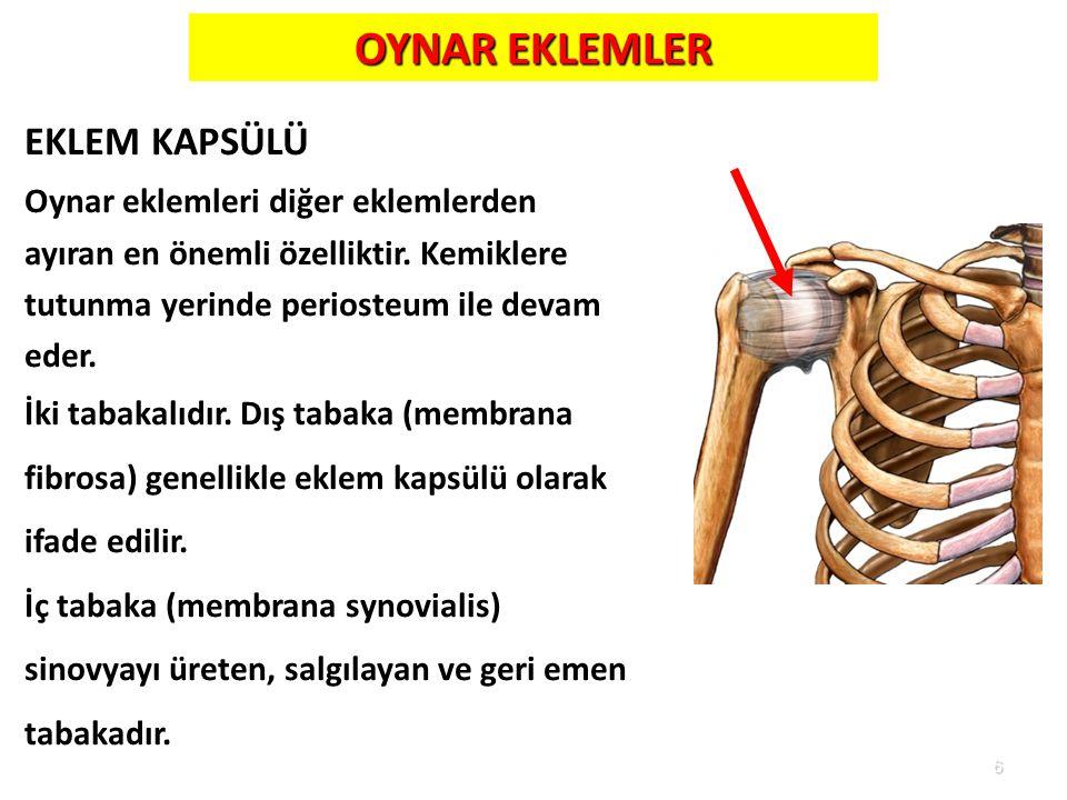 6 OYNAR EKLEMLER EKLEM KAPSÜLÜ Oynar eklemleri diğer eklemlerden ayıran en önemli özelliktir. Kemiklere tutunma yerinde periosteum ile devam eder. İki