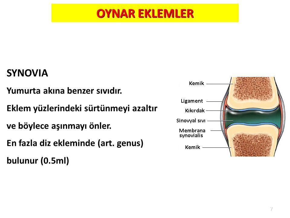 7 OYNAR EKLEMLER SYNOVIA Yumurta akına benzer sıvıdır. Eklem yüzlerindeki sürtünmeyi azaltır ve böylece aşınmayı önler. En fazla diz ekleminde (art. g