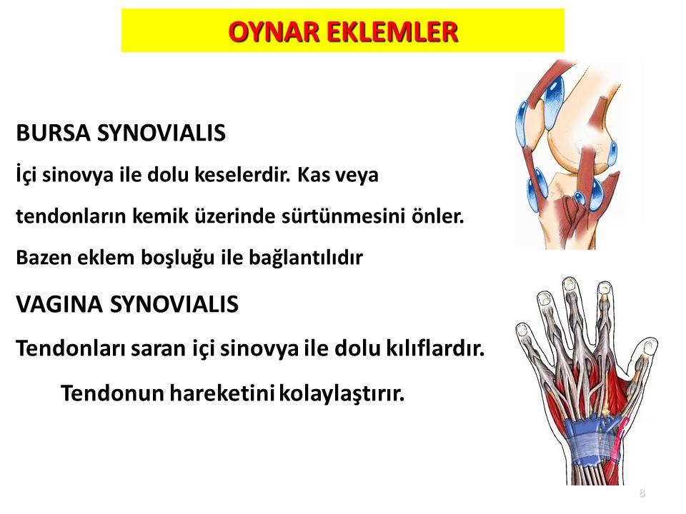 8 OYNAR EKLEMLER BURSA SYNOVIALIS İçi sinovya ile dolu keselerdir. Kas veya tendonların kemik üzerinde sürtünmesini önler. Bazen eklem boşluğu ile bağ