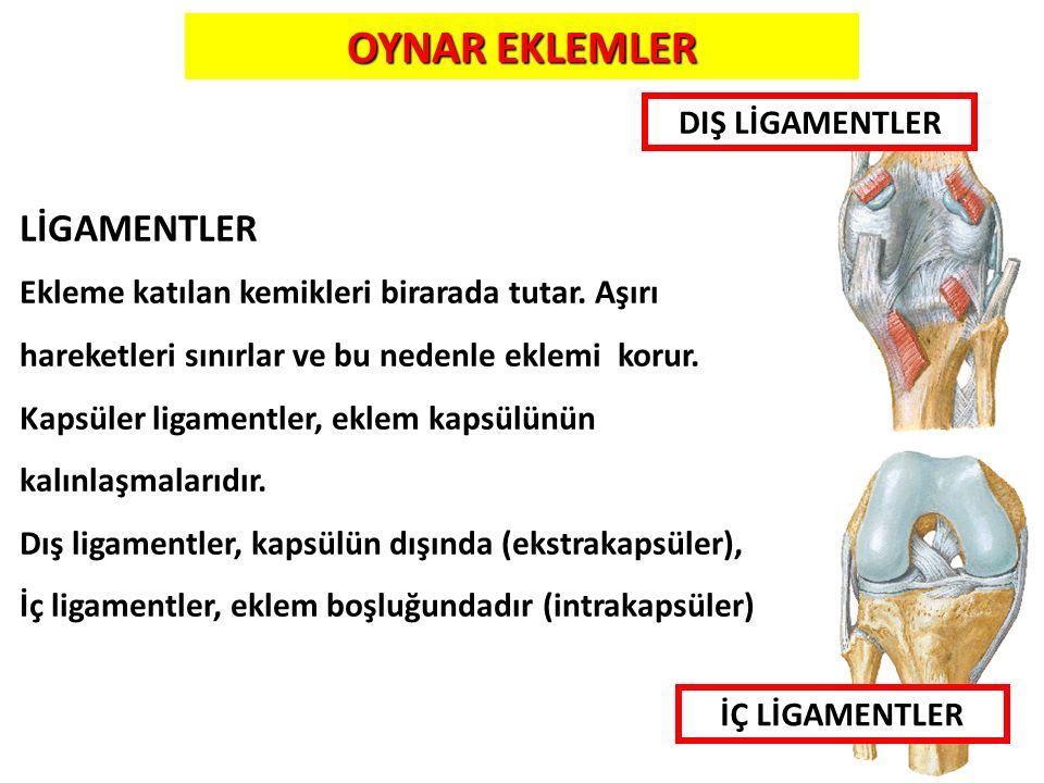 9 LİGAMENTLER Ekleme katılan kemikleri birarada tutar. Aşırı hareketleri sınırlar ve bu nedenle eklemi korur. Kapsüler ligamentler, eklem kapsülünün k
