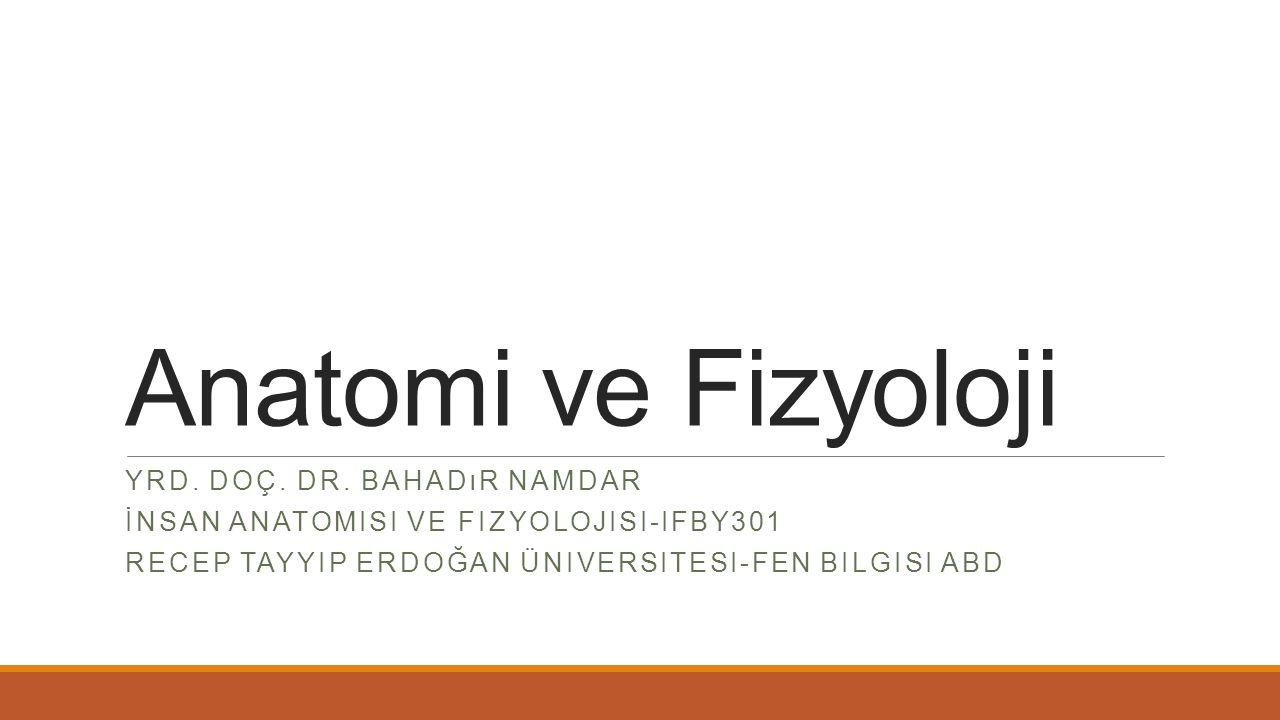 Anatomi ve Fizyoloji YRD. DOÇ. DR. BAHADıR NAMDAR İNSAN ANATOMISI VE FIZYOLOJISI-IFBY301 RECEP TAYYIP ERDOĞAN ÜNIVERSITESI-FEN BILGISI ABD