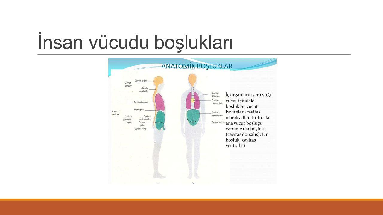 İnsan vücudu boşlukları