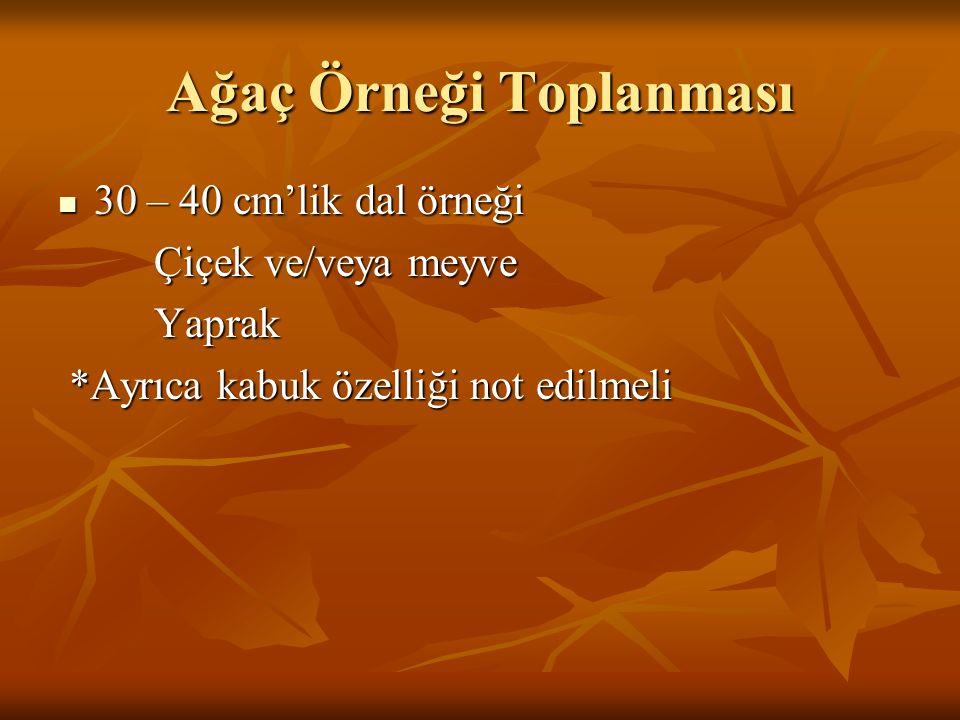 Arazi Kayıt Bilgileri Türkiye Florası 1-10. cilt Grid (Kareleme) Sistemi