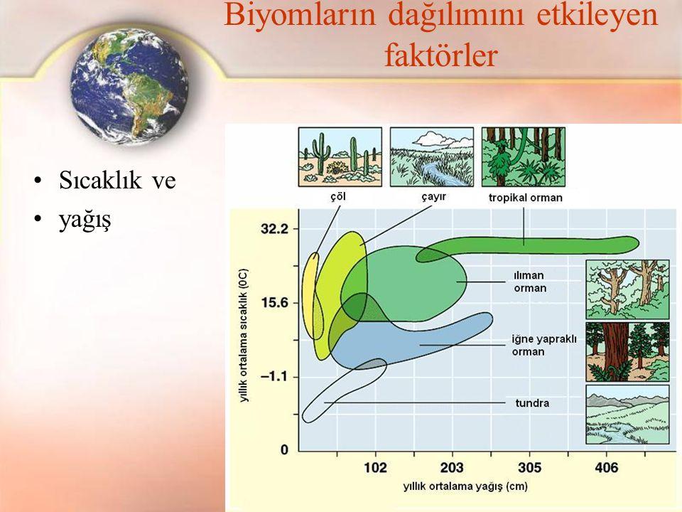 Biyomların dağılımını etkileyen faktörler Sıcaklık ve yağış
