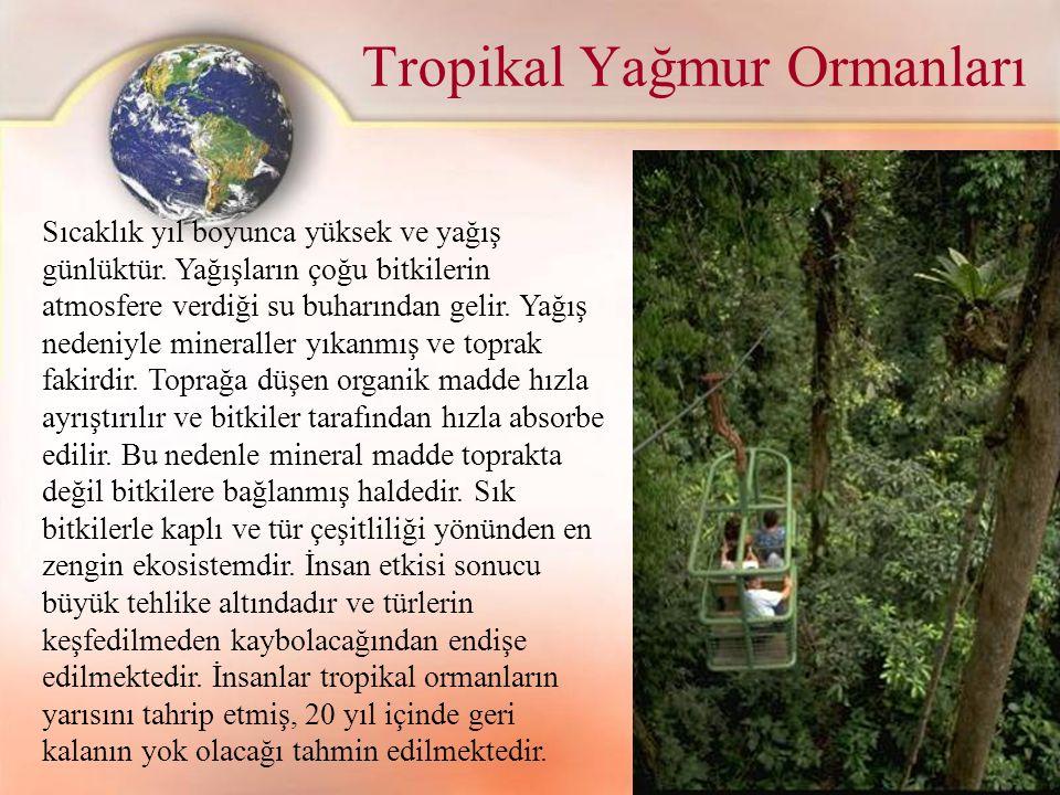Tropikal Yağmur Ormanları Sıcaklık yıl boyunca yüksek ve yağış günlüktür. Yağışların çoğu bitkilerin atmosfere verdiği su buharından gelir. Yağış nede