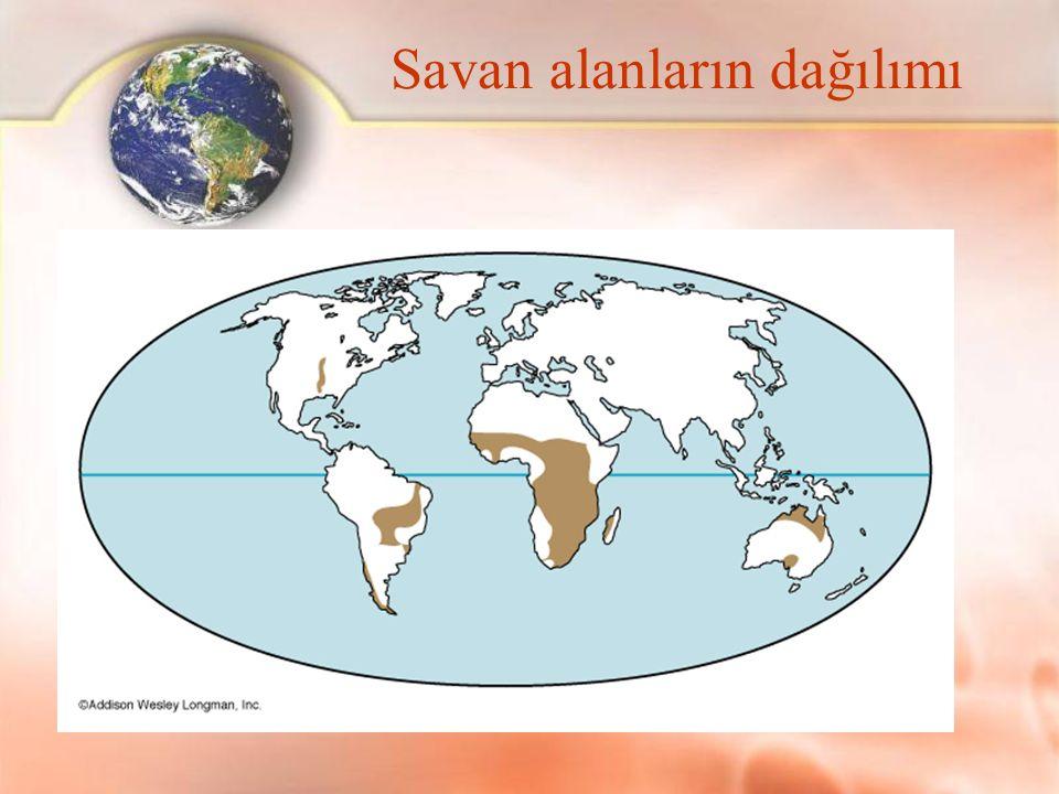 Savan alanların dağılımı
