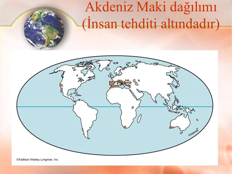 Akdeniz Maki dağılımı (İnsan tehditi altındadır)