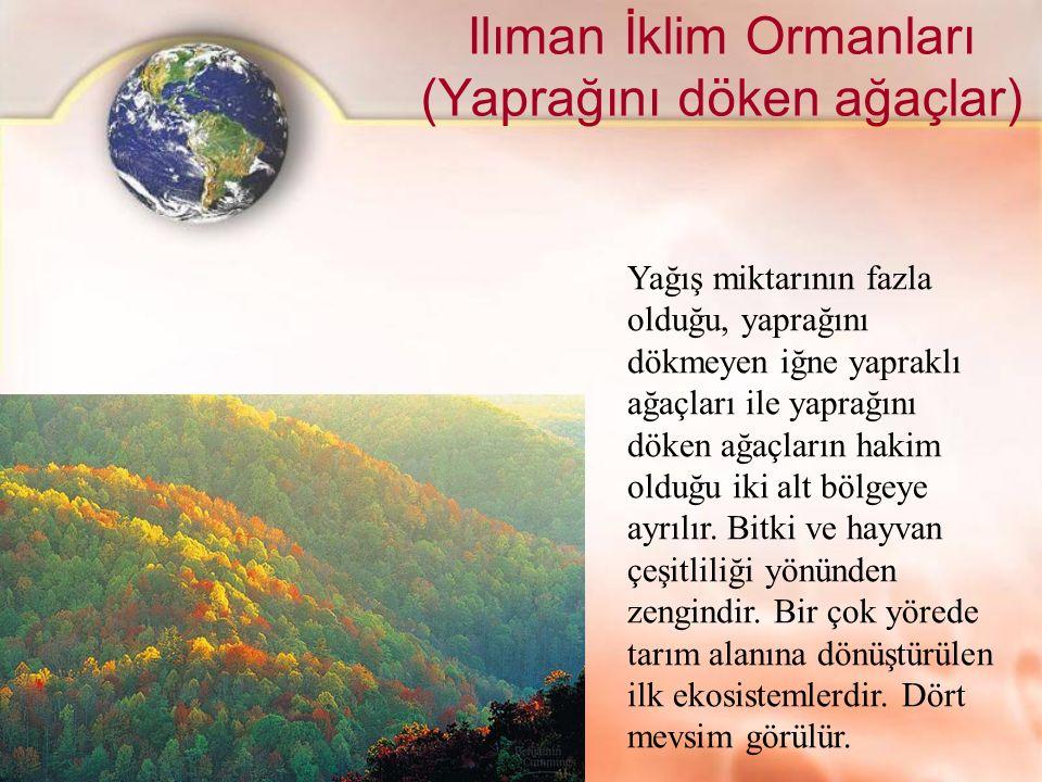 Ilıman İklim Ormanları (Yaprağını döken ağaçlar) Yağış miktarının fazla olduğu, yaprağını dökmeyen iğne yapraklı ağaçları ile yaprağını döken ağaçları