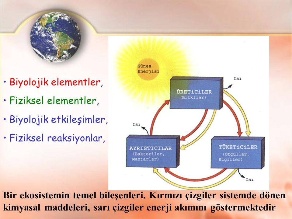 Bir ekosistemin temel bileşenleri. Kırmızı çizgiler sistemde dönen kimyasal maddeleri, sarı çizgiler enerji akımını göstermektedir Biyolojik elementle