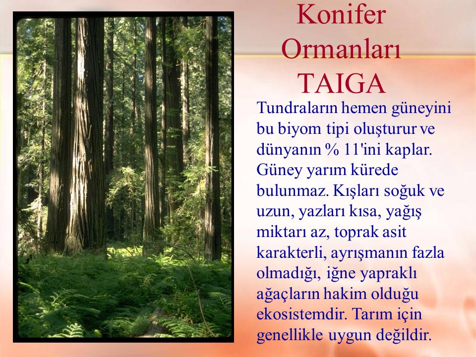 Konifer Ormanları TAIGA Tundraların hemen güneyini bu biyom tipi oluşturur ve dünyanın % 11'ini kaplar. Güney yarım kürede bulunmaz. Kışları soğuk ve