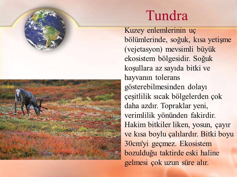 Tundra Kuzey enlemlerinin uç bölümlerinde, soğuk, kısa yetişme (vejetasyon) mevsimli büyük ekosistem bölgesidir. Soğuk koşullara az sayıda bitki ve ha
