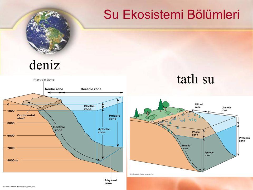 Su Ekosistemi Bölümleri deniz tatlı su