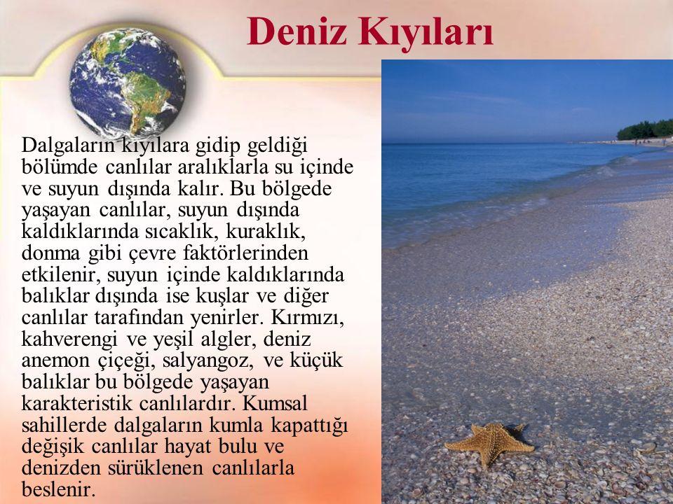 Deniz Kıyıları Dalgaların kıyılara gidip geldiği bölümde canlılar aralıklarla su içinde ve suyun dışında kalır. Bu bölgede yaşayan canlılar, suyun dış