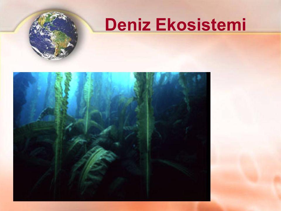 Deniz Ekosistemi