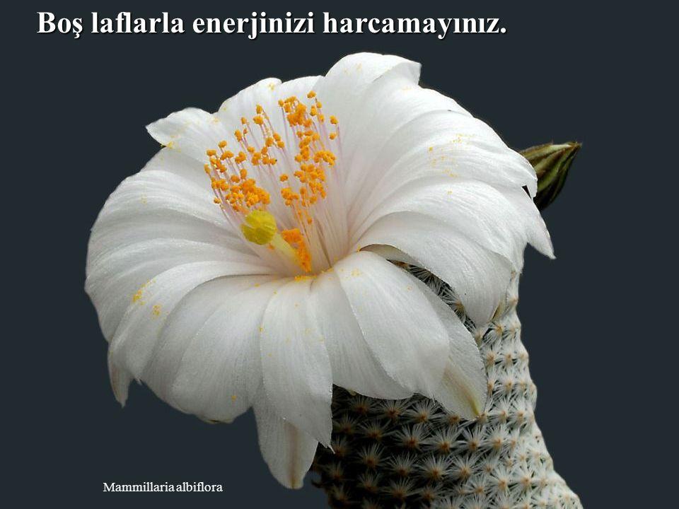 Escobaria wissmannii Her gün en az 3 kişiyi güldürmeye çalışınız.