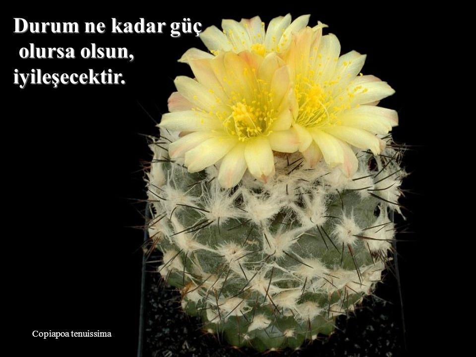 Mammillaria slevinii İnsanların sizi düşünmeleri pek önemli değil. Bu sizin probleminiz olamaz.