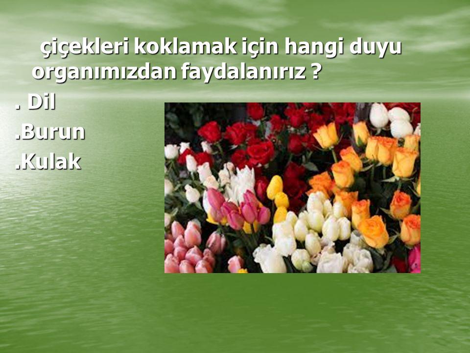 çiçekleri koklamak için hangi duyu organımızdan faydalanırız ? çiçekleri koklamak için hangi duyu organımızdan faydalanırız ?. Dil.Burun.Kulak