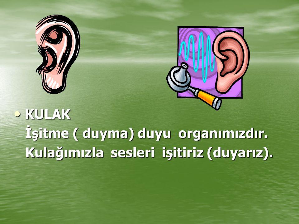 KULAK KULAK İşitme ( duyma) duyu organımızdır. İşitme ( duyma) duyu organımızdır. Kulağımızla sesleri işitiriz (duyarız). Kulağımızla sesleri işitiriz